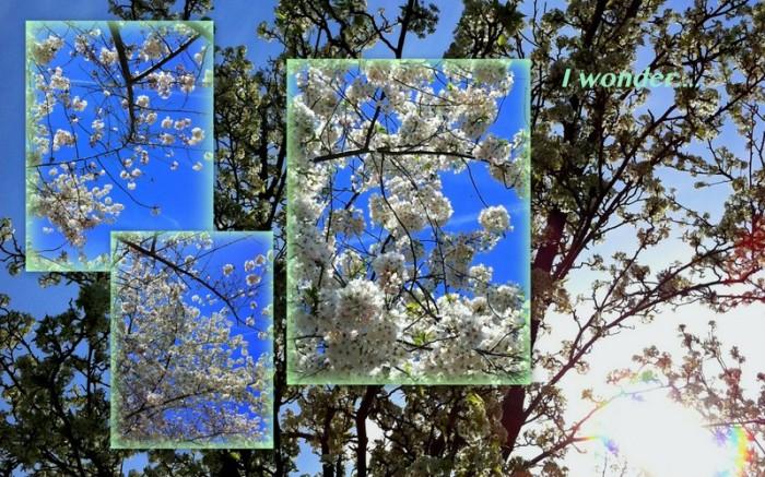 1-Pics for Blog Edits55