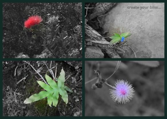1-Pics for Blog Edits215