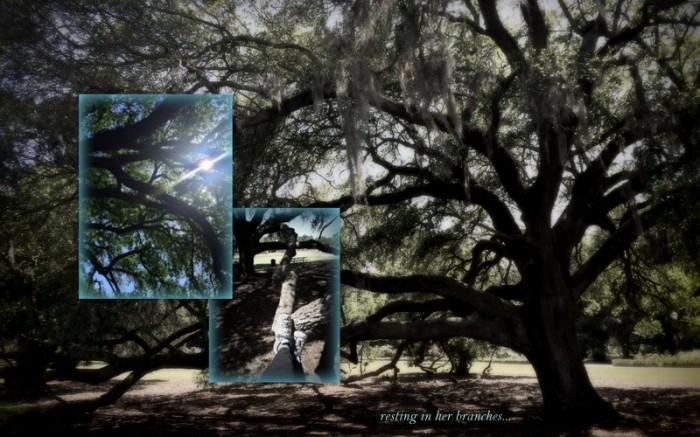 1-Pics for Blog Edits232