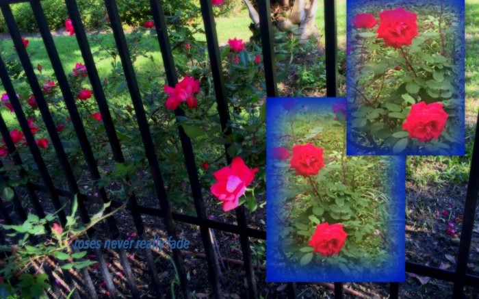 1-Pics for Blog Edits233