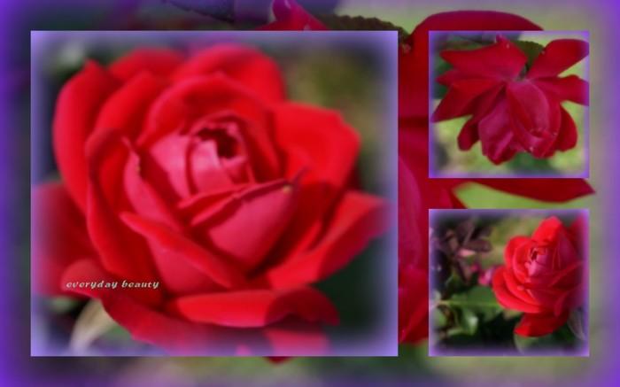 1-Pics for Blog Edits239