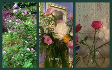1-Pics for Blog Edits267