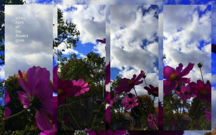 1-Pics for Blog Edits308