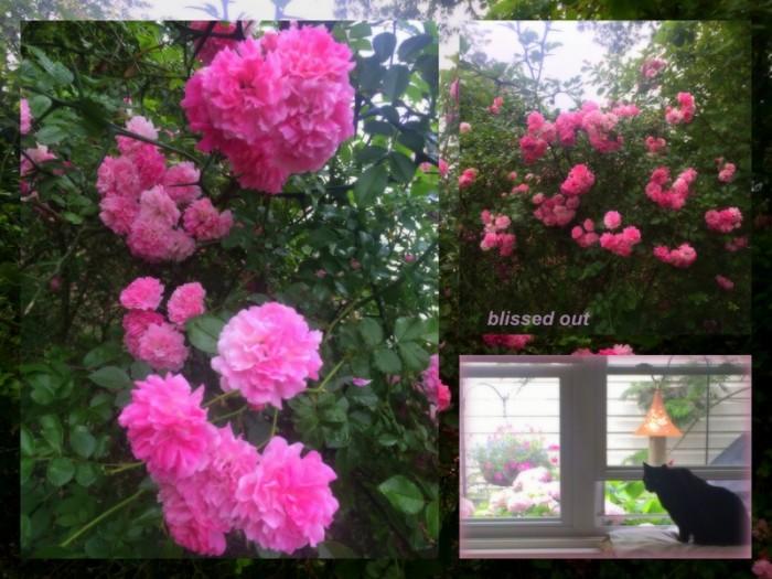 1-Pics for Blog Edits401