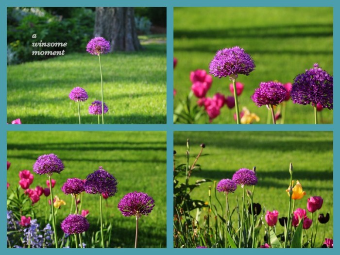 1-Pics for Blog Edits482