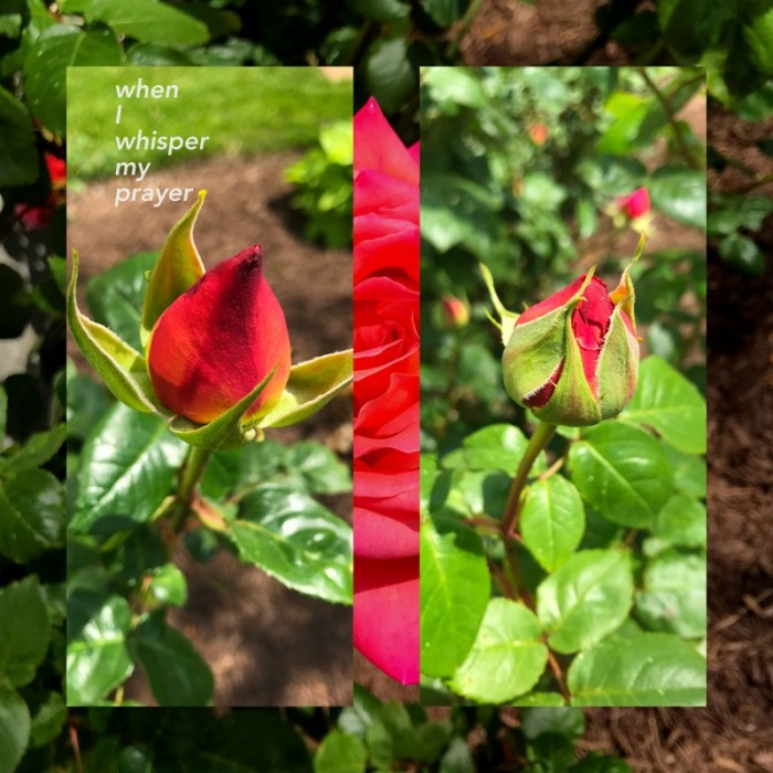 1-Pics for Blog Edits537.jpg