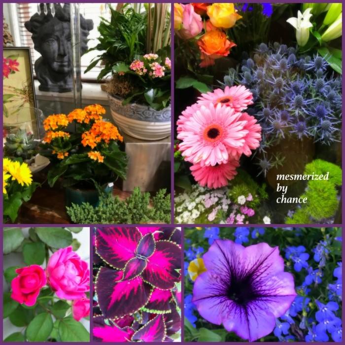 1-Pics for Blog Edits542
