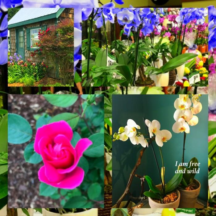 1-Pics for Blog Edits551.jpg