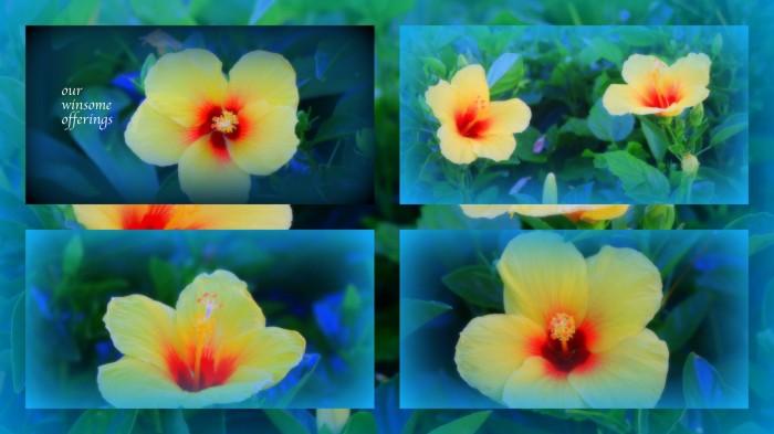 1-pics for blog edits583